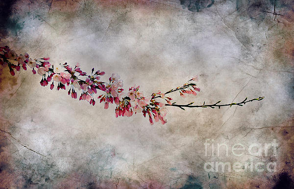 Blossom Branch Print by Elaine Manley