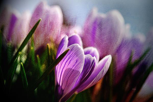 Lois Bryan - Blossom By Blossom