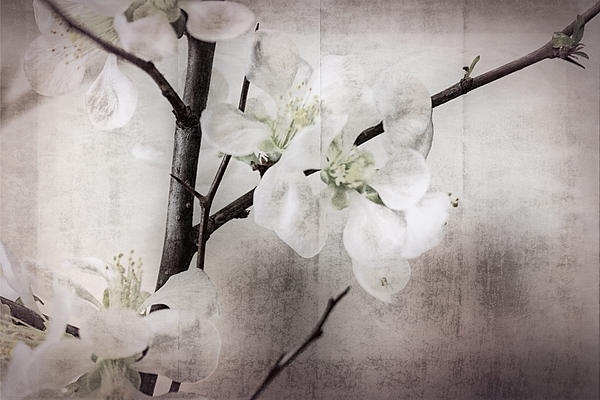 Stephen Walker - Blossoms in a Japanese Style