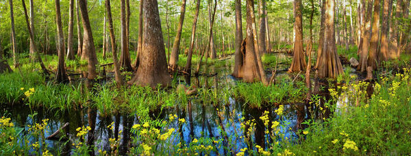 Blue Bayou Print by Skip Hunt