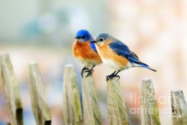 Blue Birds Print by Scott Pellegrin