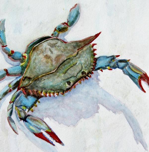 Blue Crab Art http://fineartamerica.com/featured/blue-crab-pam-utton ...