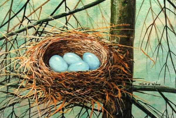 Blue Eggs In Nest Painting
