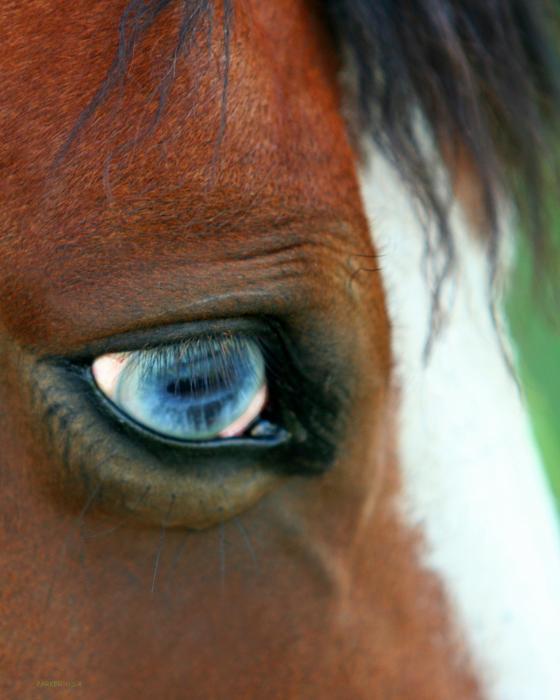 Everyone loves a blue eyed girl Blue-eye-horse-parker