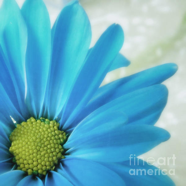 Roxanne  Handelong - Blue Flower