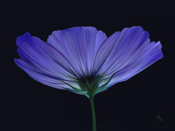 Blue Flower Print by Sue  Brehant