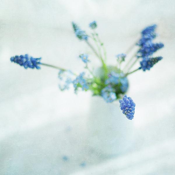 Blue Flowers In White Jug Print by Jill Ferry