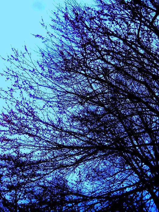 Blue Hue Too Print by Allen n Lehman
