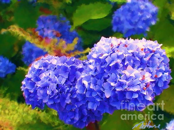 Blue Hydrangea Print by Methune Hively