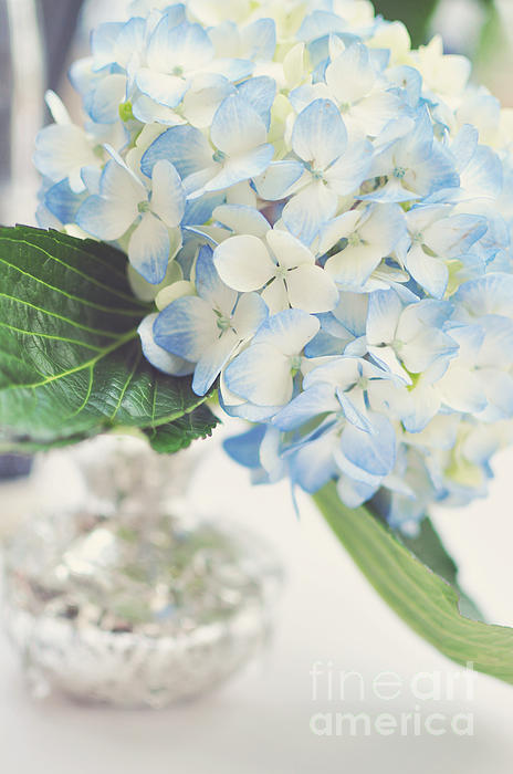 Blue Hydrangea Print by Tamara Adams