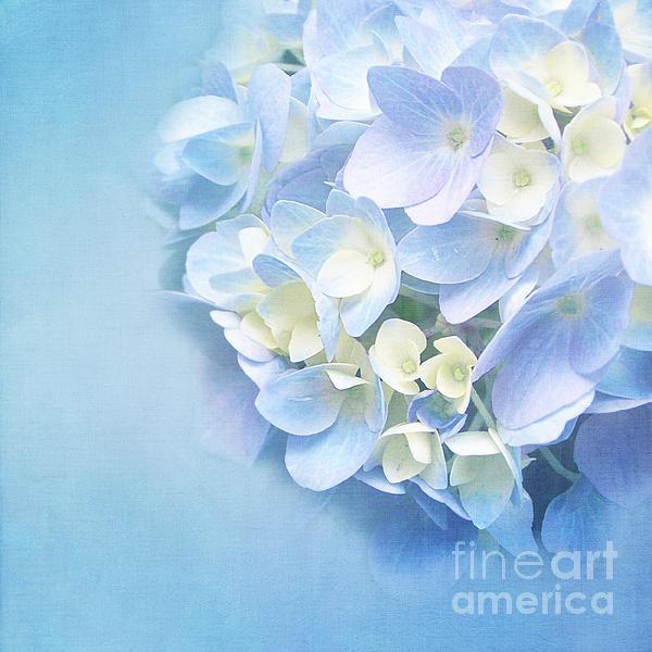 Blue Hydrangea Print by Viaina