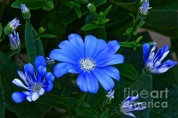 Blue Magic Print by Byron Varvarigos