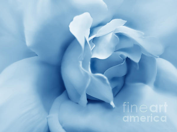 Blue Pastel Rose Flower Print by Jennie Marie Schell