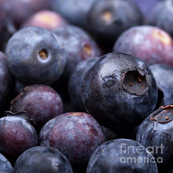 Blueberry Background Print by Jane Rix