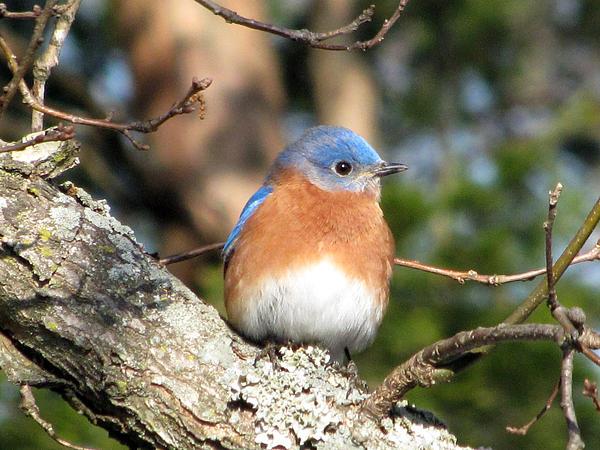Amy Tyler - Bluebird
