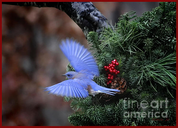 Nava Jo Thompson - Bluebird Christmas Wreath