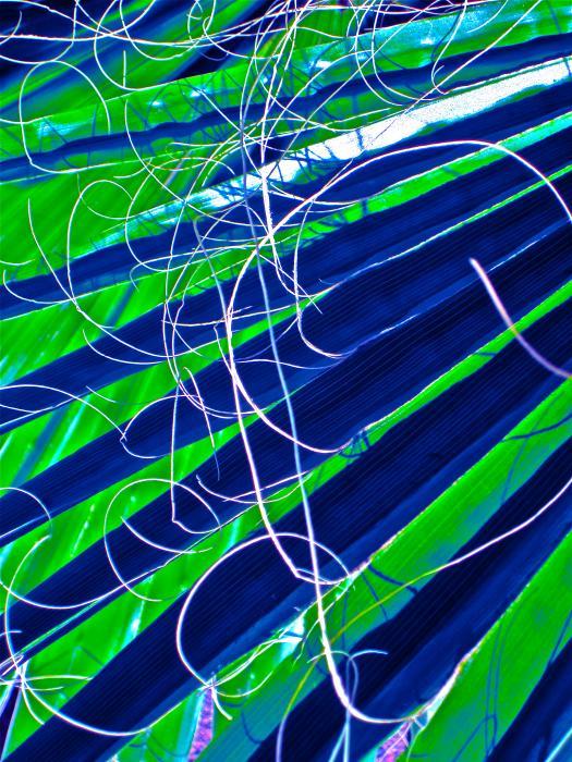 Bluegreen Palm Fun Print by Gwyn Newcombe