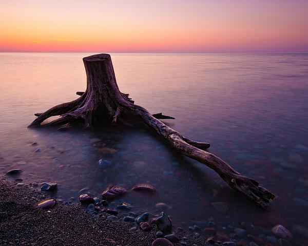 Darren Creighton - Bluffs Beach Stump