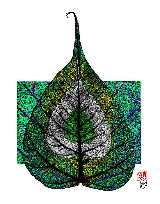 Bodhi Leaf Print by Peter Cutler