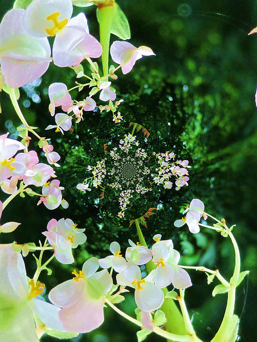 Mary Ann Southern - Boisterous Begonia