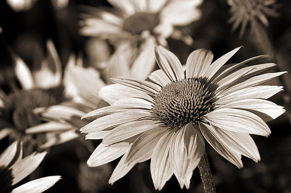 Bold and Beautiful in Monochrome Photograph