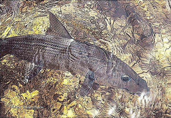 Bonefish World Print by Alex Suescun