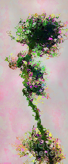 Bonsai Print by Terril Heilman
