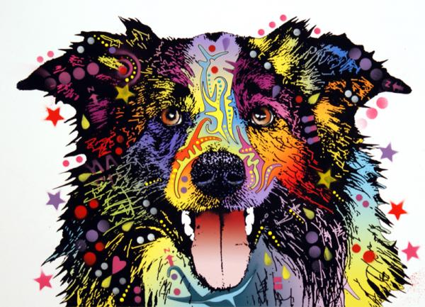 Border Collie 2 Print by Dean Russo