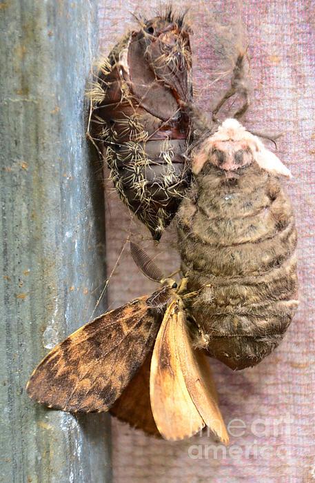 Jiss Joseph - Born A Butterfly