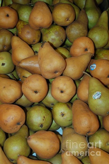 Bosch Pears Photograph