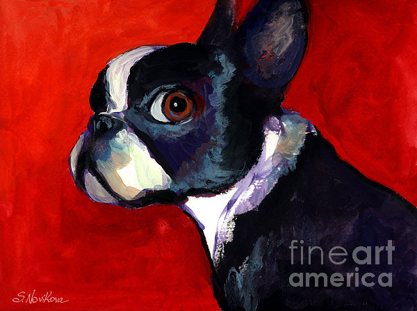 Svetlana Novikova - Boston Terrier dog portrait 2