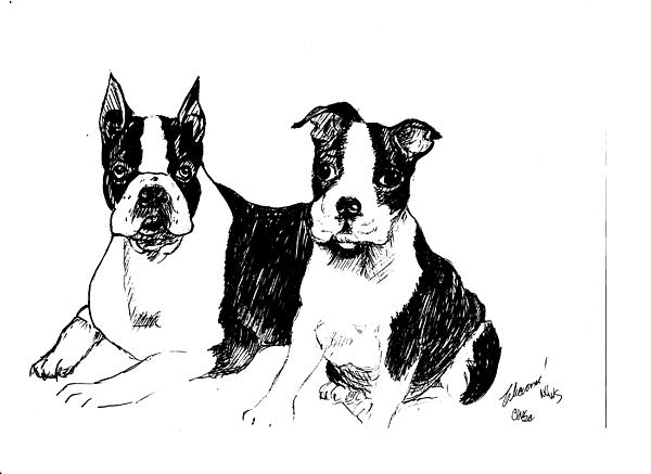 Charme Curtin - Boston Terriers