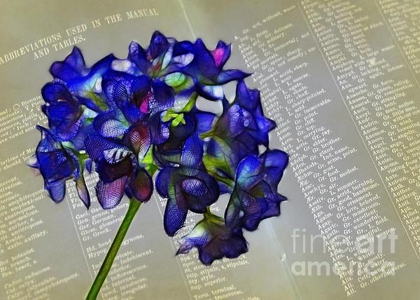 Botany Book Print by Judi Bagwell