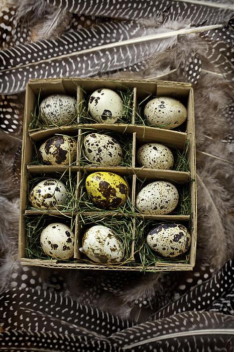 Box Of Quail Eggs Print by Garry Gay