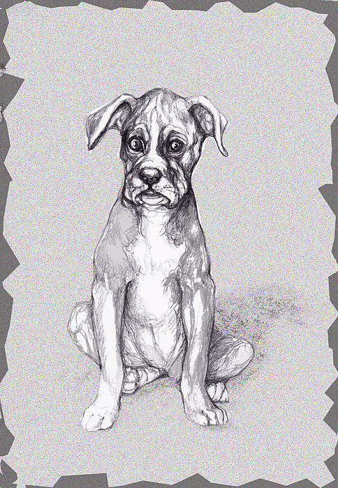 Boxer Pup Print by Peggy Wilson