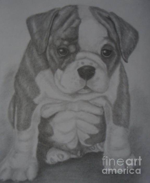 Boxer Puppy Print by Ian Lennox