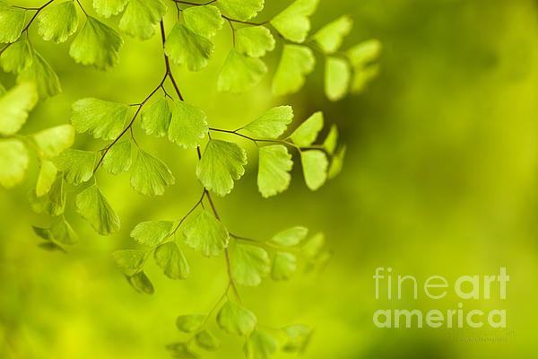 Branching Out Print by Reflective Moment Photography And Digital Art Images