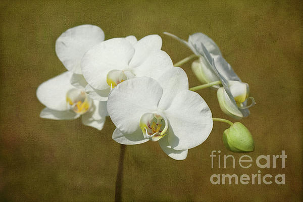 Brazen Beauty Print by Reflective Moments  Photography and Digital Art Images