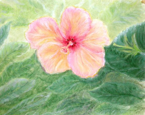 Brazil Flower Pastel