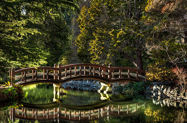 Matt Dobson - Bridge in Japanese Gardens - Hatley Gardens