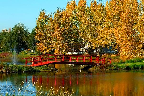 Rose Szautner - Bridge Over Placid Waters