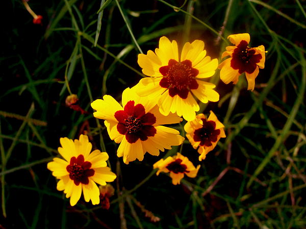 Bright Wildflowers Photograph