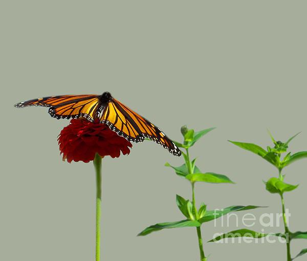 John From CNY - Brilliant Butterfly