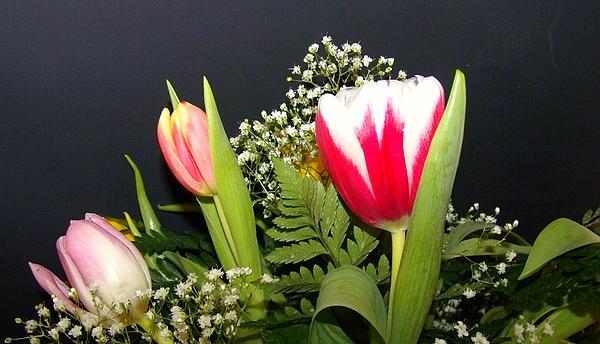 Jose Lopez - Brilliant Flowers