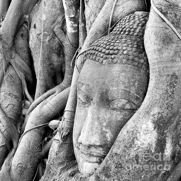 Tanatat Ariyapinyo - Buddha head surrounded by roots