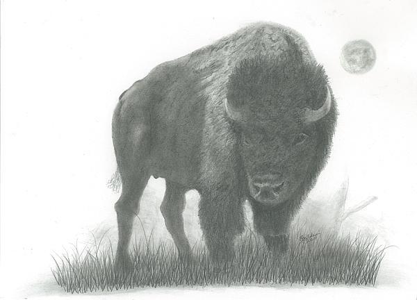 Buffalo   Print by EJ John Baldwin
