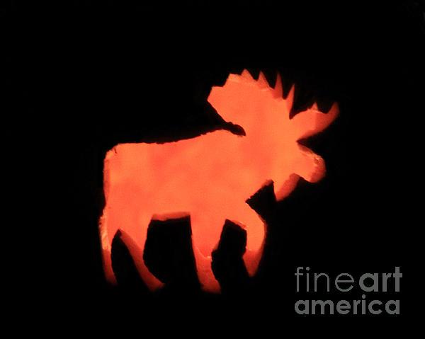 Bull Moose Pumpkin Print by Lloyd Alexander