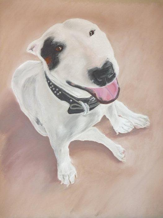 Greg  Curtis - Bull Terrier
