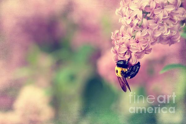Datha Thompson - Bumble Bee