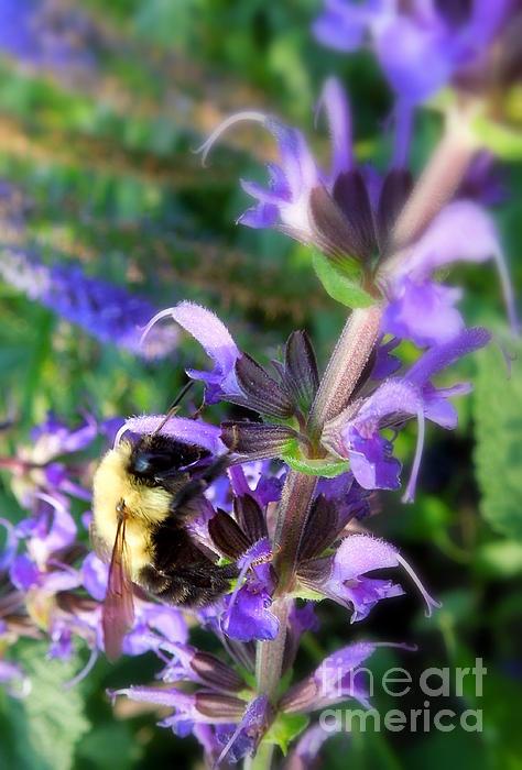 Bumble Bee On Flower Print by Renee Trenholm